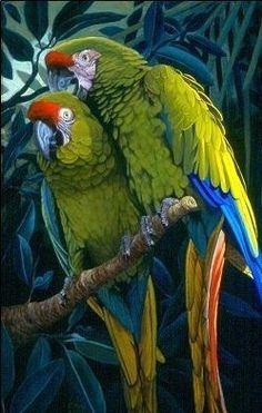 Limited Edition Print - Military Macaws - World Parrot Trust USA eStore Cute Birds, Pretty Birds, Beautiful Birds, Animals Beautiful, Tropical Birds, Exotic Birds, Colorful Birds, Bird Drawings, Animal Drawings