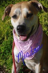 URGENT!!! YOUNGSTOWN, OHIO>>.642//Meadow is an adoptable Labrador Retriever Dog in Youngstown, OH. CONTACT: stoohey@mahoningcountyoh.gov � Available: �8/5 All dogs are spayed/neutered before you bring them home. $80 to the vet fo...