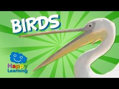 Bird Feeding Adaptations: How Beaks are Adapted to What Birds Eat - YouTube