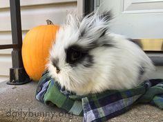 Bunny and his pumpkin enjoy the brisk fall air - November 9, 2015
