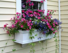 Window Box Contest Entry windowbox - Gardening In Lights Container Flowers, Container Plants, Container Gardening, Window Box Flowers, Flower Boxes, Lawn And Garden, Garden Pots, Window Planter Boxes, Garden Windows