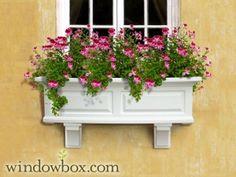 Presidential Window Box - White