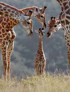 Admiring the young giraffe