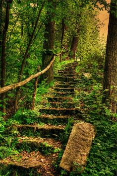 Beautiful Stairs in Forest. Like a Fairytale.