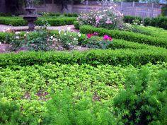I adore boxwood. It's elegant, evergreen, and -- when established -- drought-tolerant. Spring Garden, Propagation, Hedges, Landscaping Melbourne, Boxwood, Boxwood Landscaping, Farm Gardens, Shabby Cottage Garden, Backyard