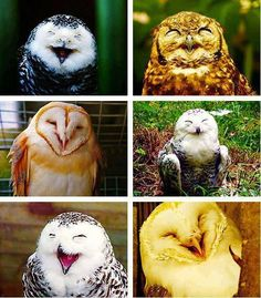 Happy owls!