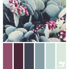 Succulent Tones ❤ liked on Polyvore featuring design seeds, backgrounds, filler, color schemes and colors