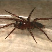How to Keep Spiders Out of Your Outside Patio Storage Boxes | eHow