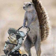 Haha. I want a squirrel so bad!