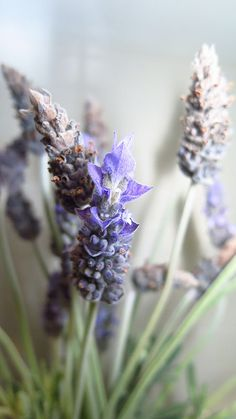 Lavender flowers with my new diffuser! | Flickr - Photo Sharing!
