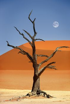 Namibia, Sossusvlei, Deadvlei by Dietmar Temps, via Flickr