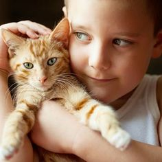 """According to Andrea Arden, an Animal Planet Pet Expert and professional pet trainer, """"Cats sometimes don't get the credit they deserve. They are often seen as solitary, aloof creatures. Animals For Kids, Animals And Pets, Funny Animals, Cute Animals, Baby Cats, Cats And Kittens, Kitty Cats, Cat Brain, Pet Trainer"""