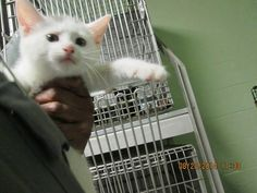 NEW YORK has been rescued by WHISKERS ANIMAL RESCUE AND SANCTUARY, SC! Shelters, Type 3, Animal Rescue, York, Facebook, Cats, Photos, Animals, Gatos