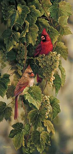 Vineyard-Cardinals by Rosemary Millette