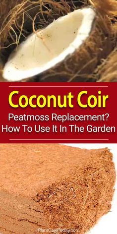 Use organic coconut coir bricks like peat moss in gardening to add absorbency and drainage to potting soil and as an amendment to garden soil. [LEARN MORE]