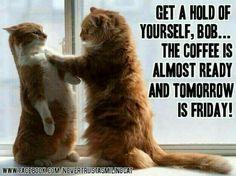 #GoodMorning Happy Thursday #getaholdofyourselfbob
