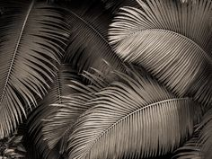 Hilo Palms by Brooks Jensen Winter Images, Cartoon Faces, Nature Plants, Tropical Art, Zoom Photo, Trends, Beach Photography, Inspiring Photography, Landscape Photographers