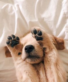welpen İsimsiz You are in the right place about Dogs running Here we offer you the most beautiful pictures about the small Dogs you are looking for. When you examine the welpen İsimsiz p Cute Little Puppies, Cute Little Animals, Cute Dogs And Puppies, Cute Funny Animals, Baby Dogs, Doggies, Funny Dogs, Cute Dog Wallpaper, Tier Wallpaper