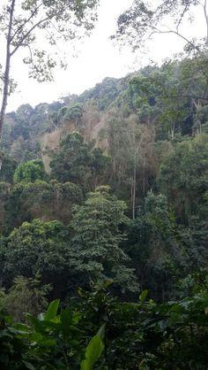 Doi Pui National Park, Chiang Mai - Thailand