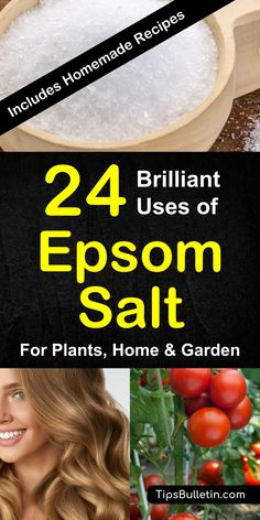 Epsom salt uses for plant, garden, health and home application. Including using this home remedy for detox, skin, hair, feet soak, bath as well as lawn fertilizer, to boost growing tomatoes and peppers. Includes several recipes.#epsomsalt #plant #health #bath Epsom Salt For Plants, Epsom Salt Uses, Deep Cleaning Tips, House Cleaning Tips, Cleaning Hacks, Tomato Garden, Tomato Plants, Gardening For Beginners, Gardening Tips