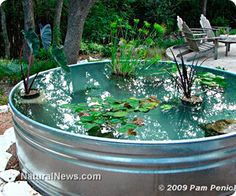 Revitalize your backyard water garden with spring pond maintenance and cleaning
