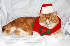 Jolly santa cat by Kimberleyelrebmik on DeviantArt Christmas Cats, Santa, Deviantart, Artist, Animals, Animales, Animaux, Artists, Animal