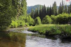 This 12.78 acres has Kalispell Creek through the property! Creek flows through easterly portion and is bordered by forest service land. Beautiful benched site overlooks creek. Quaint log foot bridge. Tall cedar trees through out. Power and phone on site. Great location is private,located on a county road and only 1.4 miles from the highway. Fly fish,stream fish,enjoy the deer that wander through. Beautiful mountain views too!