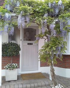 painted thirties style front door with wisteria overhang