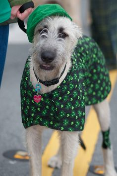Northern California Irish Wolfhound Club - 2012 St. Patrick's Day Parade San Francisco | Flickr - Photo Sharing!