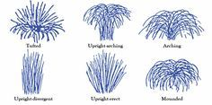 ornamental grasses shape descriptions