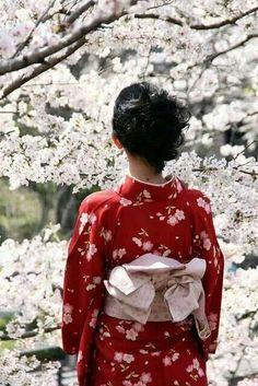 Kimono and sakura, Japan Japanese Geisha, Japanese Beauty, Japanese Kimono, Japanese Art, Japanese Gardens, Yukata, Zhang Ziyi, Michelle Yeoh, Outfit Essentials