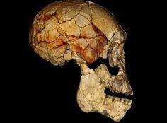 #vidaenrosario Antropólogos descubren una nueva especie humana en Kenia