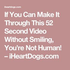If You Can Make It Through This 52 Second Video Without Smiling, You're Not Human! – iHeartDogs.com