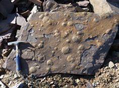 Hallaron restos fósiles de más de 545 millones de años