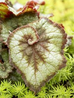 Use Interesting Plants  Include some plants in the garden that invite close inspection. For example, the real beauty of this Rex begonia leaf is in its swirling pattern.  Here's a hint: Notice how the curled leaves echo the curving shapes of this garden's borders. Paying attention to details like this helps your garden feel more put together.