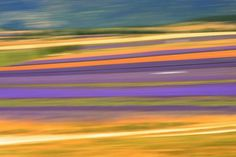 Nature's abstract.. Photo by Veronika K-Ko -- National Geographic Your Shot