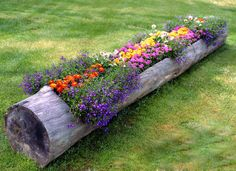 tree flower bed.  I should do this with the trunks in my back yard!