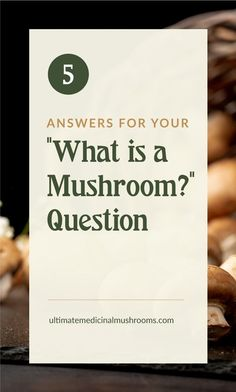 Medicinal mushrooms are extremely beneficial for our well-being though sometimes they are overlooked. And there are so much more to explore about these delightful fungi, we've only just scratched the surface. For starters, here are 5 answers to your What is Mushroom questions. | Discover more about medicinal mushrooms at ulitmatemedicinalmushrooms.com #medicinalmushroomsbenefits #healthymushrooms Mushroom Varieties, Poisonous Mushrooms, True Gift, Cell Wall, Nutrient Rich Foods, Serious Eats, Photosynthesis, Fungi, Starters