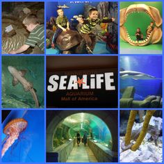 Sea Life Indoor Aquarium inside the Mall of America, Bloomington, Minnesota - Travel USA - Exploration America