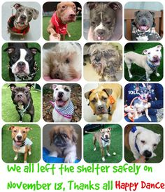 THESE 16 SWEETIES SAFELY LEFT THE SHELTER SATURDAY, 11.18.17. THANKS TO ALL FOR YOUR CONTINUED HARD WORK. HAVEN – 12040 Safe Manhattan HAVEN – 12040 1... - Taylor Easton (Please Make Adoption Your Only Option) - Google+