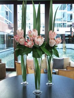 Google Image Result for http://www.flowersonfranklin.co.nz/data5/images/corporatepinkkingprotea_0.jpg