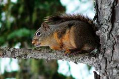 How To Make A Homemade Squirrel Call