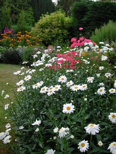 A reminder that white flowers can harmonize different colours.  Mixed herbaceous border