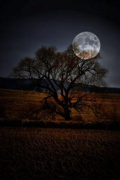 Moon Tree - Full moon rising behind an old farm tree