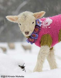 Actually a dog sweater, but I think this lamb is adorable! (via Why I Love Knitting / lamb in a sweater! Cute Baby Animals, Farm Animals, Animals And Pets, Funny Animals, Cabras Animal, Beautiful Creatures, Animals Beautiful, Wooly Bully, Sheep And Lamb