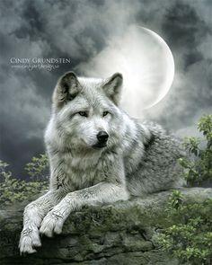 wolf | White Wolf: Enchanted Fantasy Wolf Digital Art of Cindy Grundsten