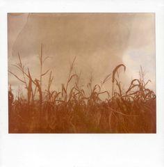 Polaroid Spectra | Polaroid Softtone