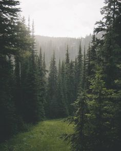 Image uploaded by Find images and videos about nature, travel and forest on We Heart It - the app to get lost in what you love. Beautiful World, Beautiful Places, Memes Arte, Nature Aesthetic, Deep Forest, Chiang Mai, Pretty Pictures, The Great Outdoors, Mother Nature