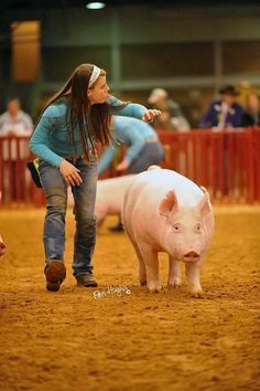 ❦ Barron Photographix - Fort Worth Stock Show & Rodeo Country Farm, Country Life, Country Girls, Fort Worth Stock Show, Pig Showing, Pig Pen, Country Senior Pictures, Show Cattle, Showing Livestock