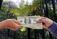 http://berufebilder.de/wp-content/uploads/2016/07/geld-vom-wald.jpg 5 Tipps, die Ihr verfügbares Kapital erhöhen: Geld vom Wald?